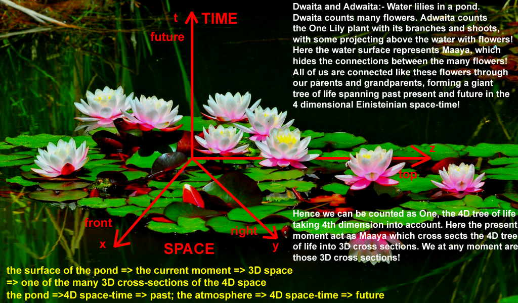 lotus-pond%204d%20spacetime.png