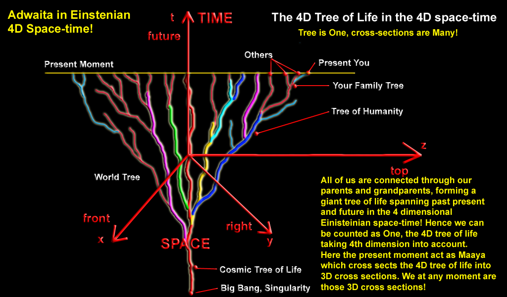 tree-of-life.png